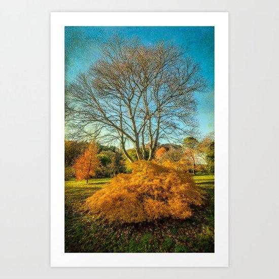 Autumnal Garden Art Print