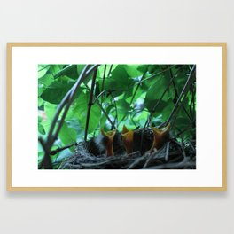 Baby Birds Framed Art Print