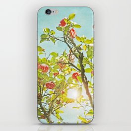 Pink Camellia japonica Blossoms and Sun in Blue Sky iPhone Skin