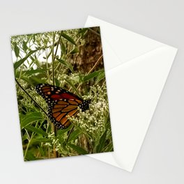 Feeding butterfly Stationery Cards