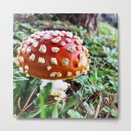 Baby Fly Agaric Mushroom by Seasons Kaz Sparks Metal Print