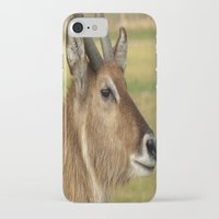 elk iPhone & iPod Cases featuring Elk by Raymond Earley