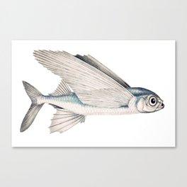 fish poisson volant Canvas Print