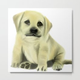 Chubby Puppy on a White Background Metal Print