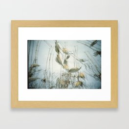 Milk Weed Framed Art Print