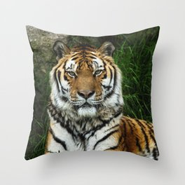 Majestic Fixed Tiger Stare Throw Pillow