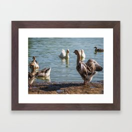 Goose at a lake in Luxembourg (Lake Echternach) Framed Art Print