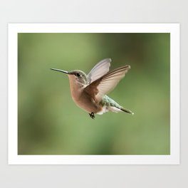 A little hummingbird love Art Print