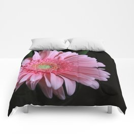 Pink Daisy Comforters