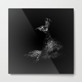 Peacock in Monochrome Metal Print