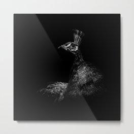 Peacock in Monochrome Metal Print