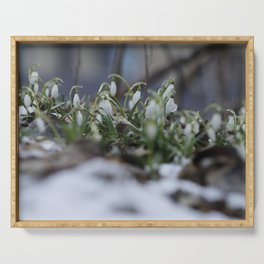 snow drop flowers - a sign of spring Serving Tray