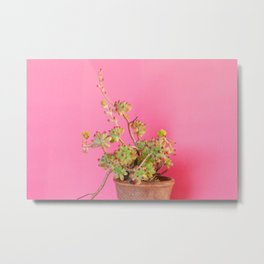 Succulent Plant Against Solid Color Background Metal Print