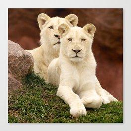 White Lion & Lioness Cubs Canvas Print