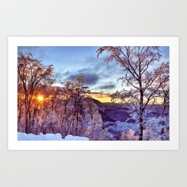 Icy Forest Awakens Art Print