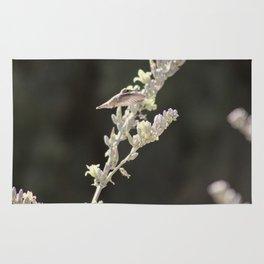 Hummingbird Hovering over Hesperaloe Parviflora Flower on Black Rug