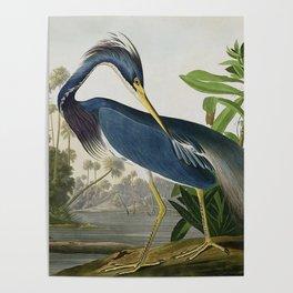 John James Audubon Louisiana Heron Painting Poster