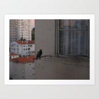 porto, in birds Art Print