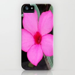 A BLUSH OF PINK iPhone Case