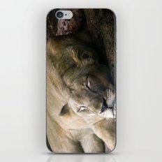Cat nap II iPhone & iPod Skin