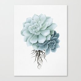 Sketch Rock Rose Canvas Print