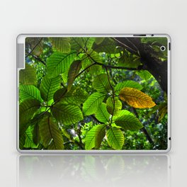 Backlit Leaves in the Peruvian Amazon Laptop & iPad Skin