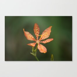 Leopard Lily in Bloom Canvas Print