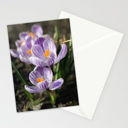 Crocuses Stationery Cards