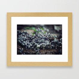 Mushroom community Framed Art Print
