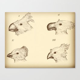 Darwin's Chocobos Canvas Print