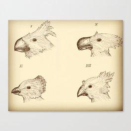 Darwin's Chocobos Canvas Print
