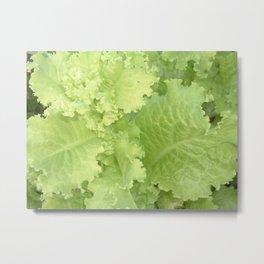 Organic Lettuce Metal Print