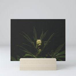 Healing Cannabis Mini Art Print