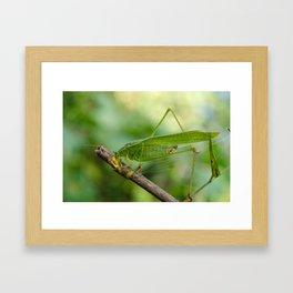 Katydid lunch Framed Art Print