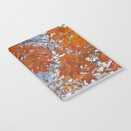 Fall Tree Photography Print Notebook