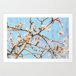 The first Bee i saw Art Print