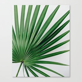 Palm Leaf Detail Canvas Print