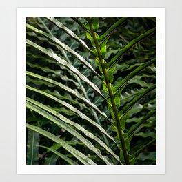 Forest Floor Frond Art Print