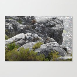 Suicidal thoughts Canvas Print