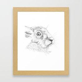 Hare Sketch By Emily Hunter-Higgins Framed Art Print
