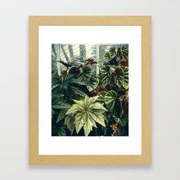 Beautiful Begonias Framed Art Print