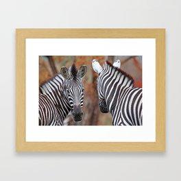 Back and forth - Africa wildlife Framed Art Print