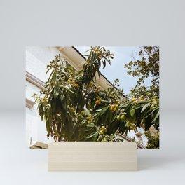 Loquat Tree Mini Art Print