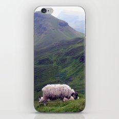 scottish sheeps, isle of skye. iPhone & iPod Skin
