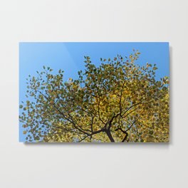 Tulip Tree in the Autumn Metal Print