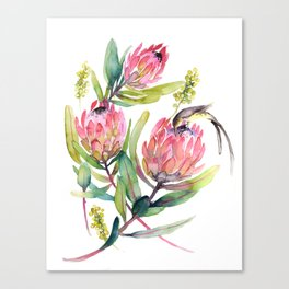 King Protea and Bird Watercolor Illustration Botanical Design Canvas Print