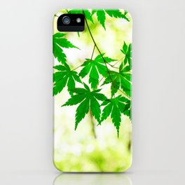 Green leaves of Japanese maple iPhone Case