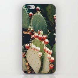 Cactus Fruit iPhone Skin