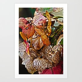In my Garden Art Print
