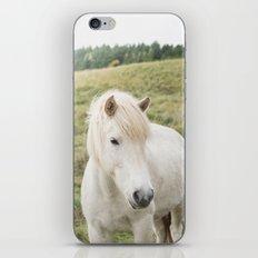 Icelandic Horse in Field iPhone & iPod Skin